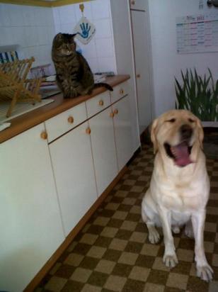 """Scott et son """"frère"""" le chat ;)"""